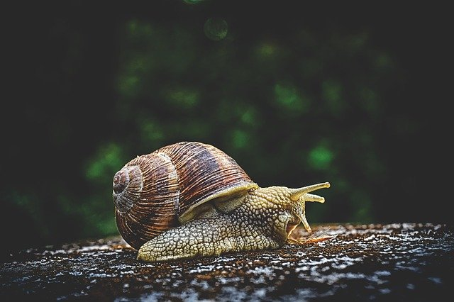 Do You Decrease Sales By Slowing Down Your Blog? 2