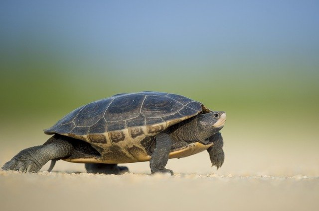 Slow and Steady Blogging Returns Add Up over the Long Haul 2
